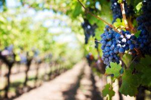 Geldanlage Wein Kapitalanlage