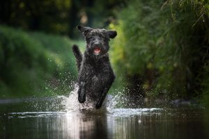 Hundekrankenversicherung gesunder Hund